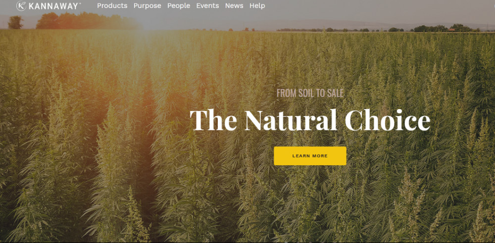 A cannabis farm in sunset with words 'The natural choice' to signify Kannaway review