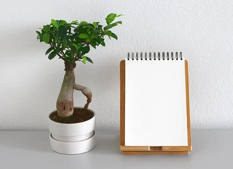Indoor plant beside a note pad